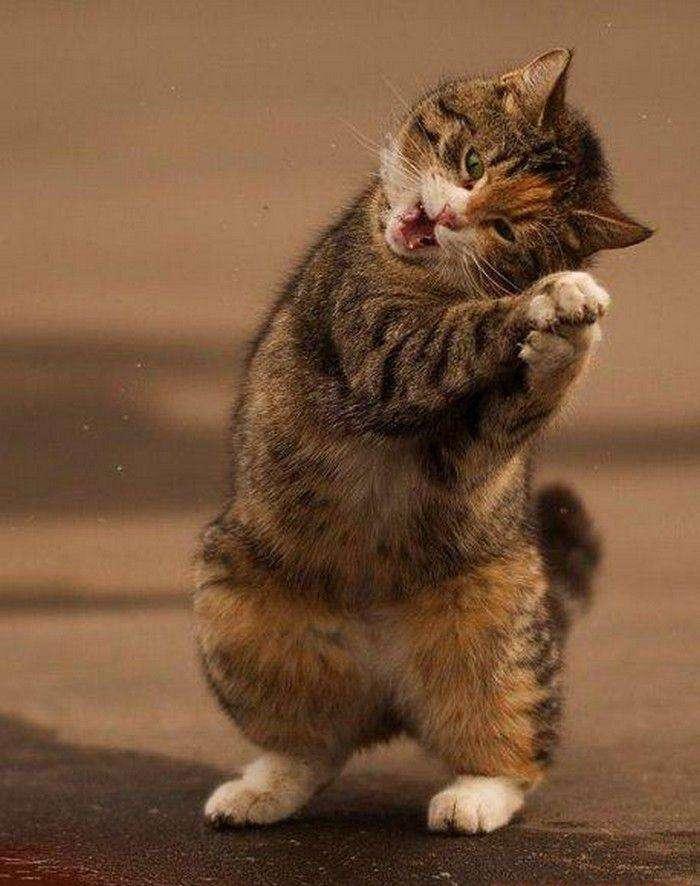 Березневий кіт (8 фото)