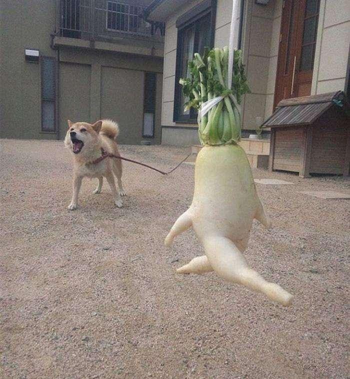 Дивні овочі (15 фото)