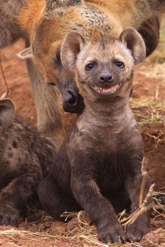 Милі і забавні тварини (28 фото)