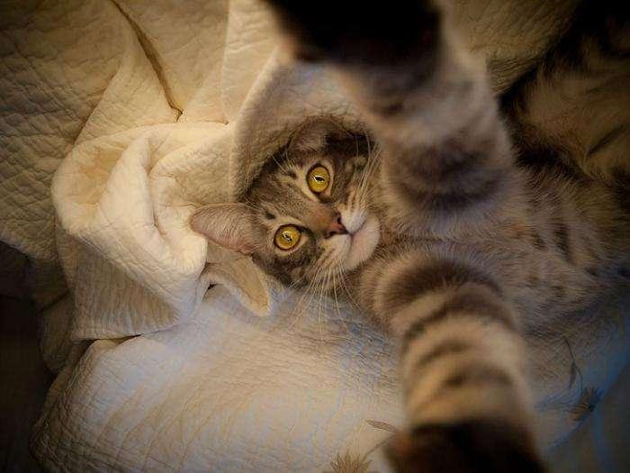 Коти і їх селфи знімки (20 фото)