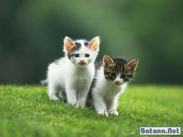 Котики (68 фото)