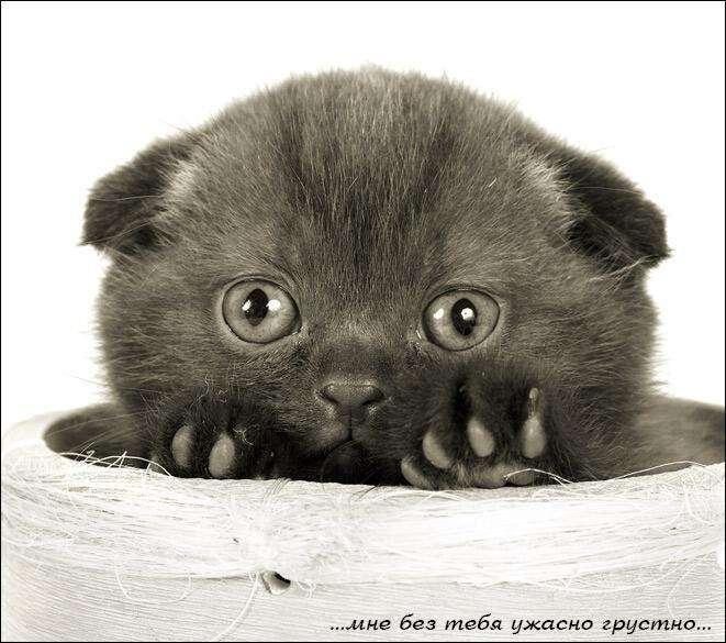 Милі котики (43 фото)