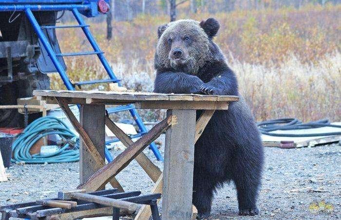 Ведмеді серед нас! (22 фото)