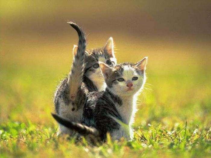 Кошенята (15 фото)