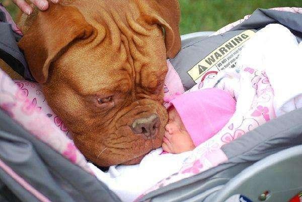 Реакція немовлят, які побачили собаку (10 фото)