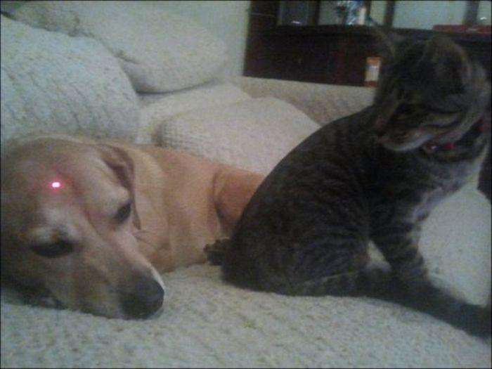 Котейки і песики (44 фото)