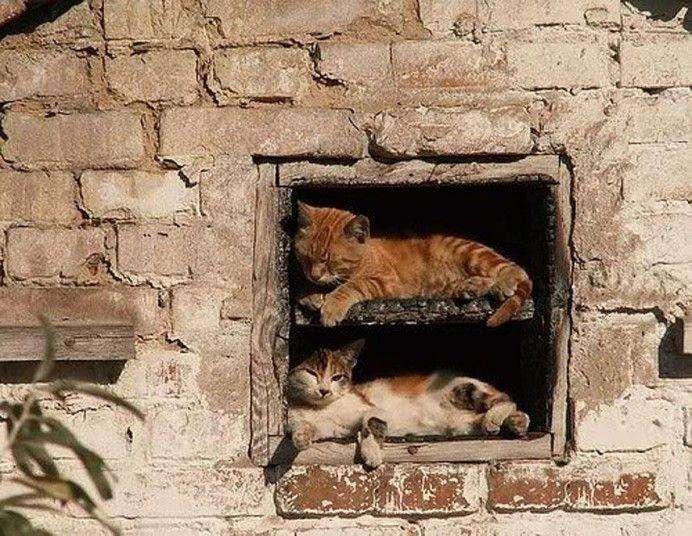 Кішки, сплячі в дивних місцях (27 фото)