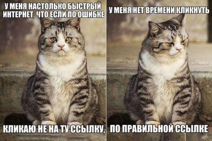 Сумний кіт (4 фото)