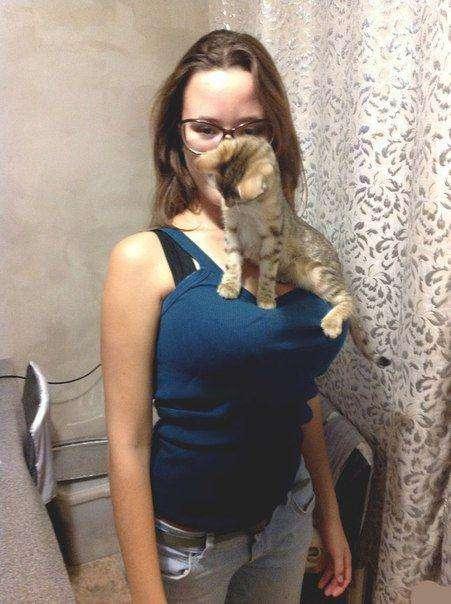 Кішки знають толк (28 фото)