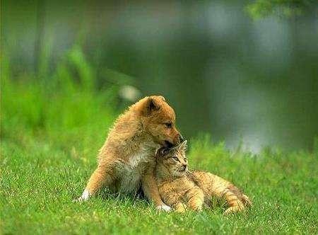 Це любов (13 фото)