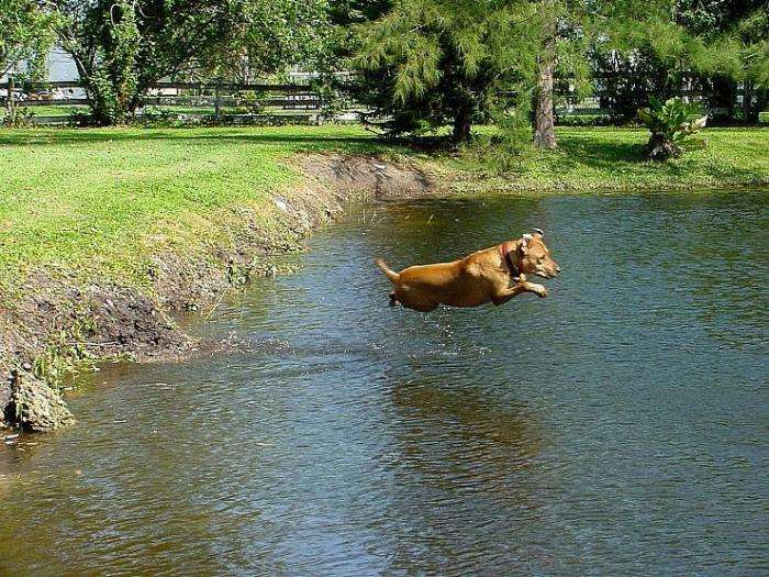 Літаючі собаки (16 фото)