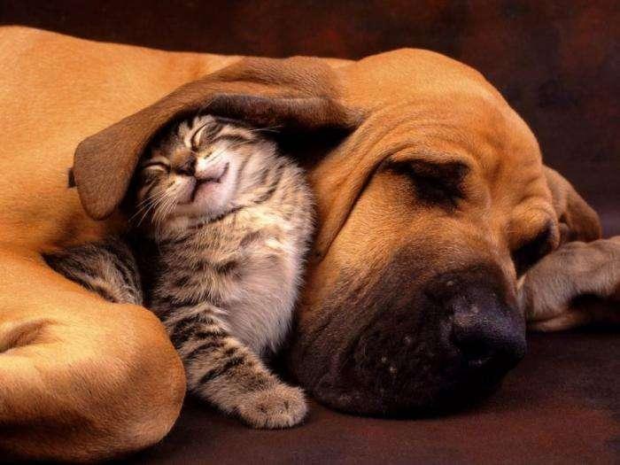 Милі тварини (17 фото)