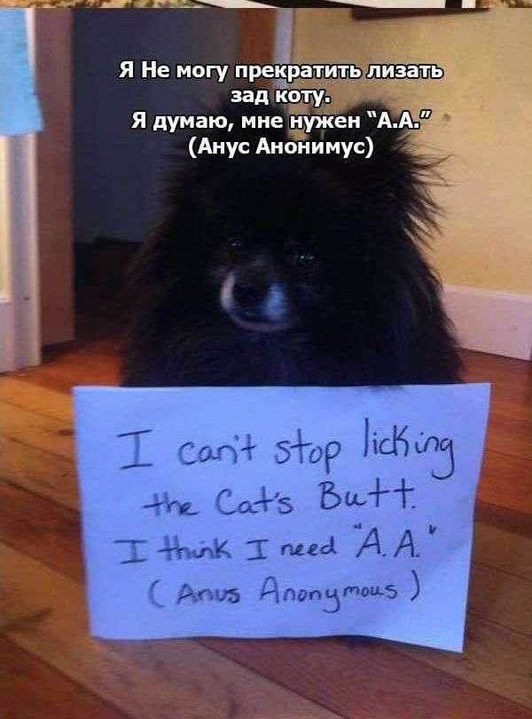 Визнання собак (27 фото)