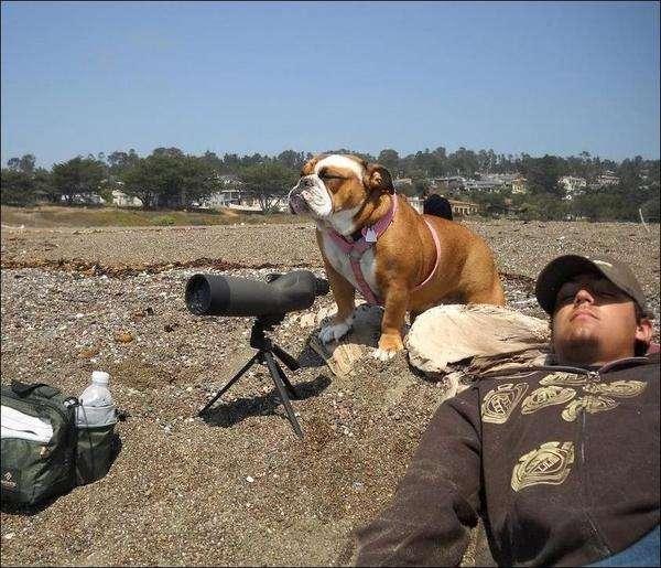 Сторожовий пес (2 фото)
