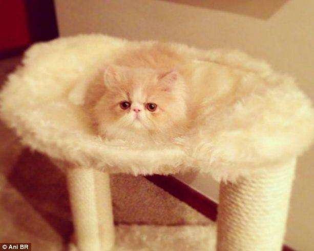 Знайди кота (16 фото)