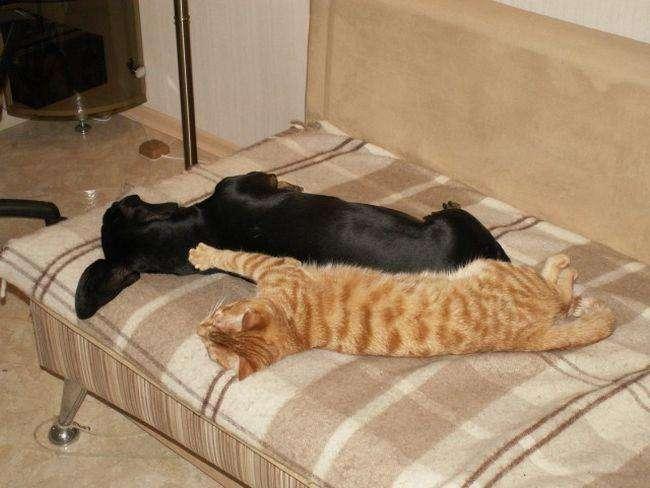 Дуже зручне місце для сну (33 фото)