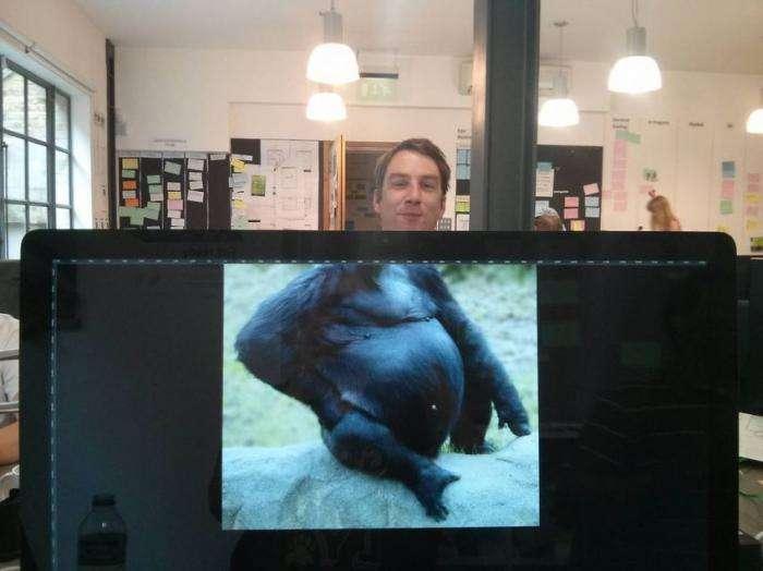 Офісний фотобомбинг (29 фото)