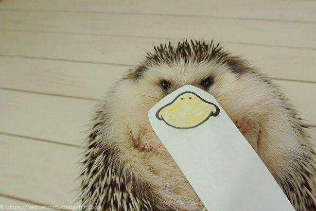 Японський їжачок підкорює твіттер (17 фото)